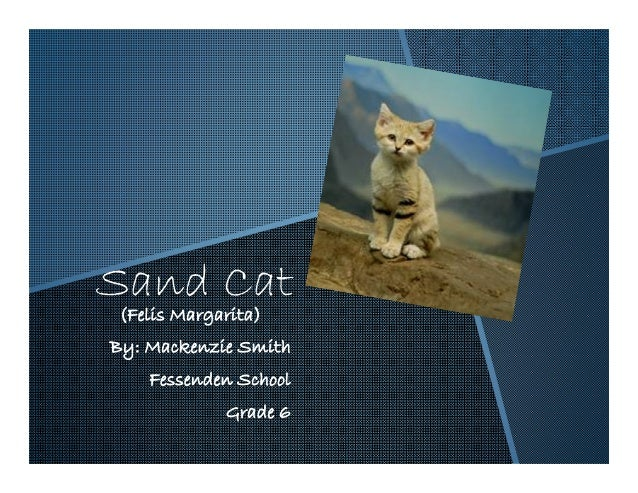 Sand Cat(Felis Margarita)By: Mackenzie Smith    Fessenden School            Grade 6