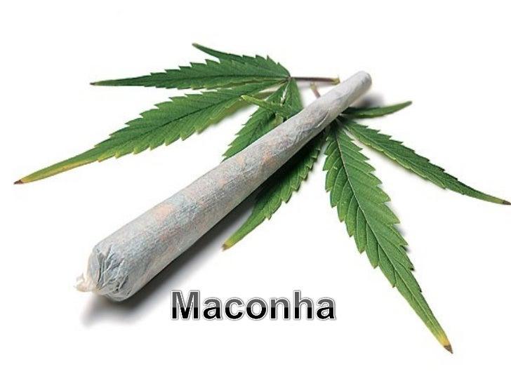  São as flores e folhas secas da planta  Cannabis Sativa, também conhecida como  Cânhamo verdadeiro. Os cigarros são  cha...