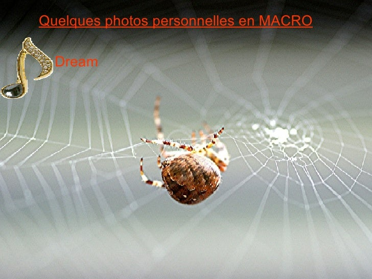 Quelques photos personnelles en MACRO Dream