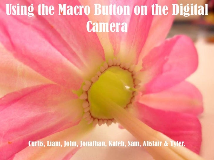 Using the Macro Button on the Digital Camera<br />Curtis, Liam, John, Jonathan, Kaleb, Sam, Alistair& Tyler.<br />