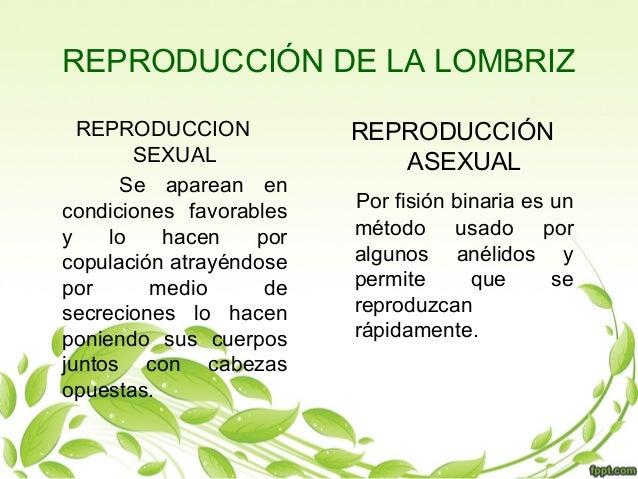 Reproduccion asexual de las lombrices de tierra
