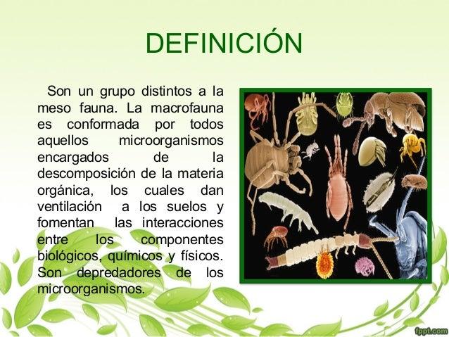 Macrofauna del suelo for Significado de suelo
