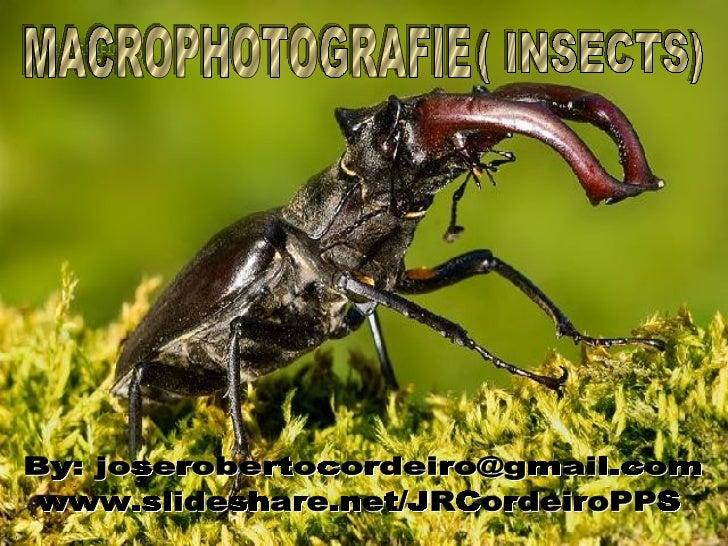 ( INSECTS) MACROPHOTOGRAFIE By: joserobertocordeiro@gmail.com www.slideshare.net/JRCordeiroPPS