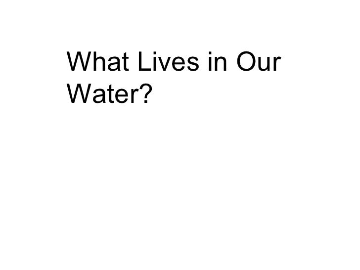 What Lives in Our Water?