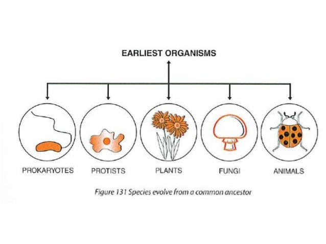 Macromolecule evolution