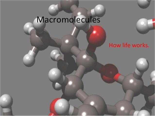 Macromolecules How life works.