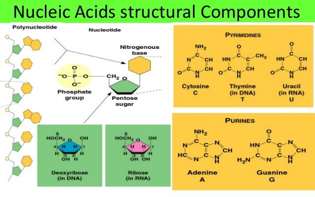 the structure and function of macromolecules 1 chapter 5 - the structure and function of large biological molecules outline i macromolecules ii carbohydrates – simple and complex.