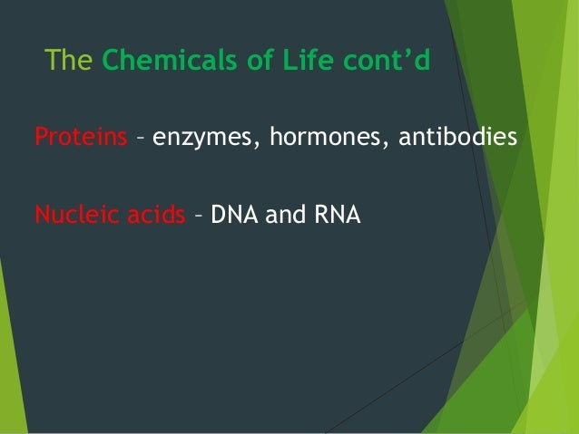 The Chemicals of Life cont'd Proteins – enzymes, hormones, antibodies Nucleic acids – DNA and RNA