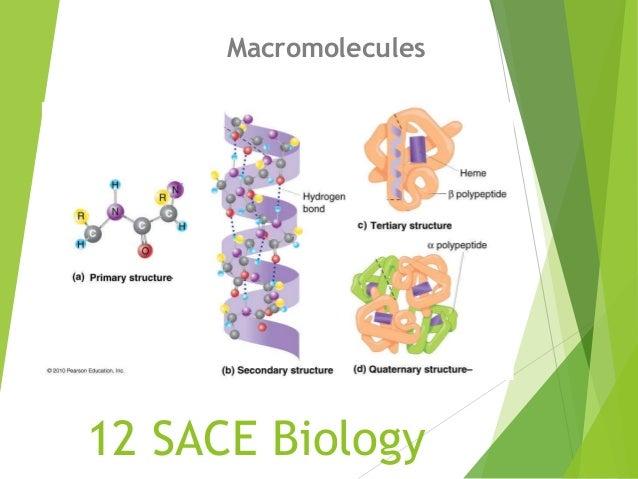 12 SACE Biology Macromolecules