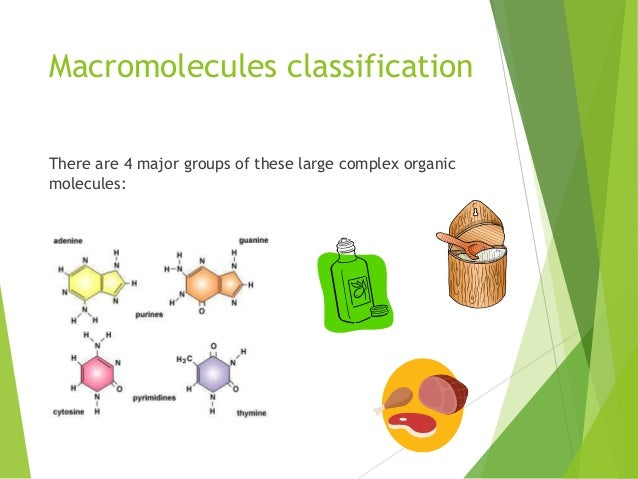 Classification of Macromolecules Essay Sample
