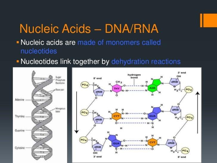 Macromolecules Slides