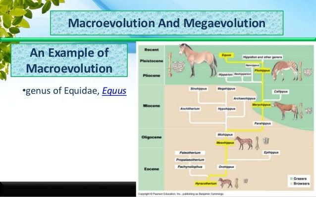 Macro N Megaevolution