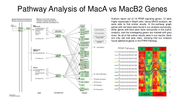 Pathway Analysis of MacA vs MacB2 Genes Authors report out of 16 PPAR signaling genes, 12 were highly expressed in MacA ce...