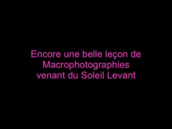 Encore une belle leçon de Macrophotographies venant du Soleil Levant