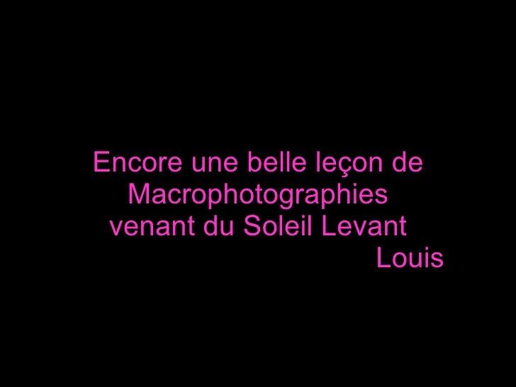 Encore une belle leçon de Macrophotographies venant du Soleil Levant   Louis