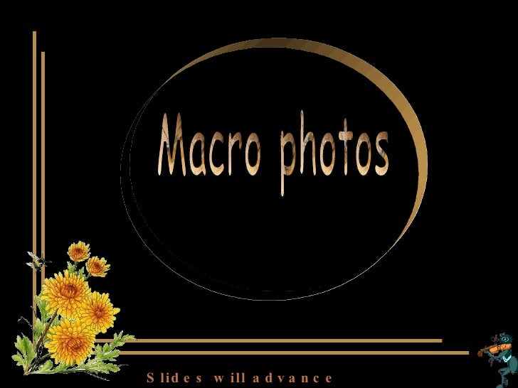 Macro photos (insects and flowers) Slides will advance automatically