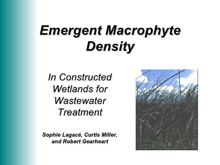 Emergent Macrophyte Density In Constructed Wetlands for Wastewater Treatment Sophie Lagacé, Curtis Miller, and Robert Gear...