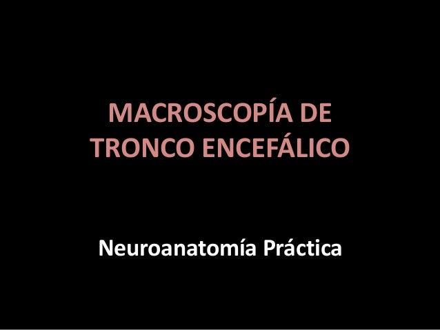 MACROSCOPÍA DE TRONCO ENCEFÁLICO Neuroanatomía Práctica