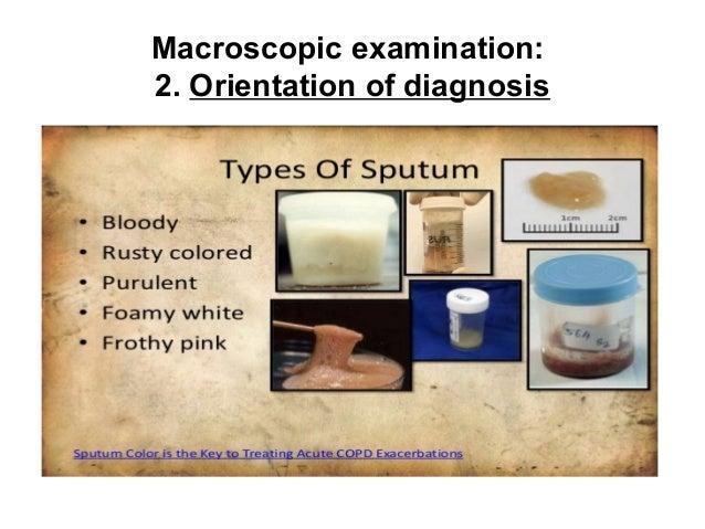 Macroscopic And Microscopic Examination In Bacteriology