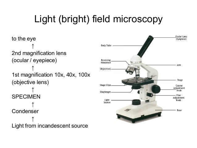 Macroscopic and microscopic examination in bacteriology light bright field microscopy ccuart Images