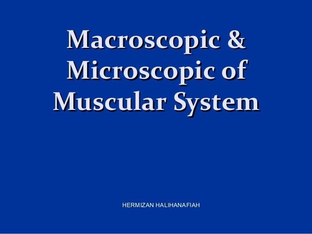 Macroscopic &Macroscopic & Microscopic ofMicroscopic of Muscular SystemMuscular System HERMIZAN HALIHANAFIAH
