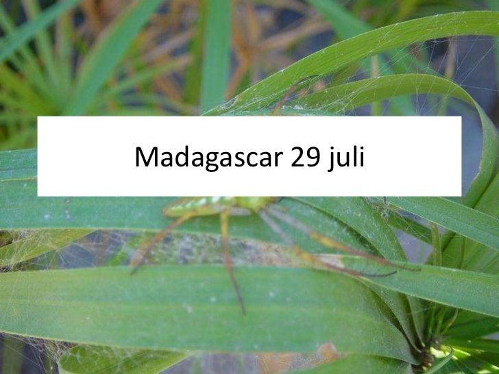 Madagascar 29 juli<br />