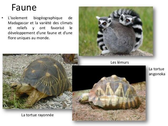 La tortue araignée La tortue à queue plane Les fosses