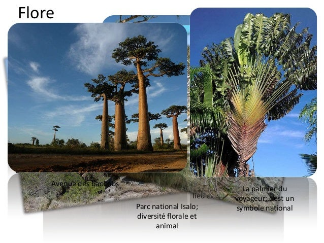 Faune • L'isolement biogéographique de Madagascar et la variété des climats et reliefs y ont favorisé le développement d'u...