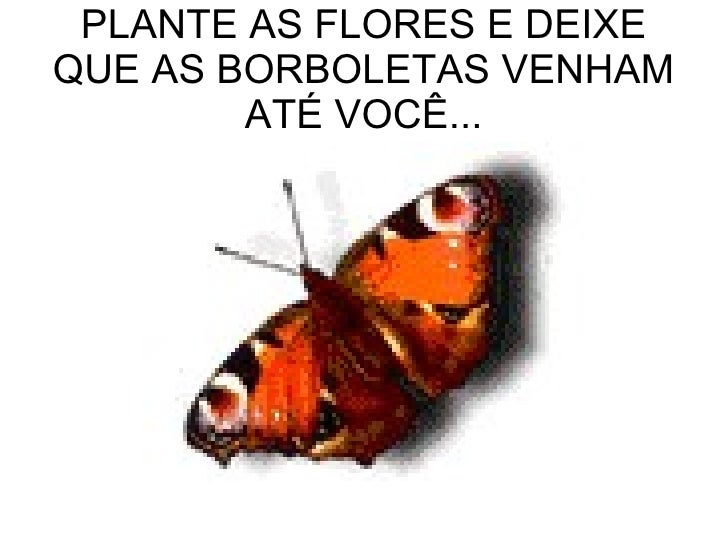 PLANTE AS FLORES E DEIXE QUE AS BORBOLETAS VENHAM ATÉ VOCÊ...