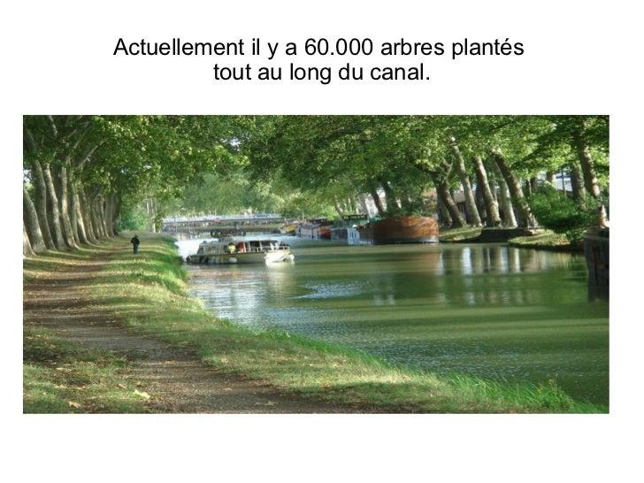 Actuellement il y a 60.000 arbres plantés  tout au long du canal.