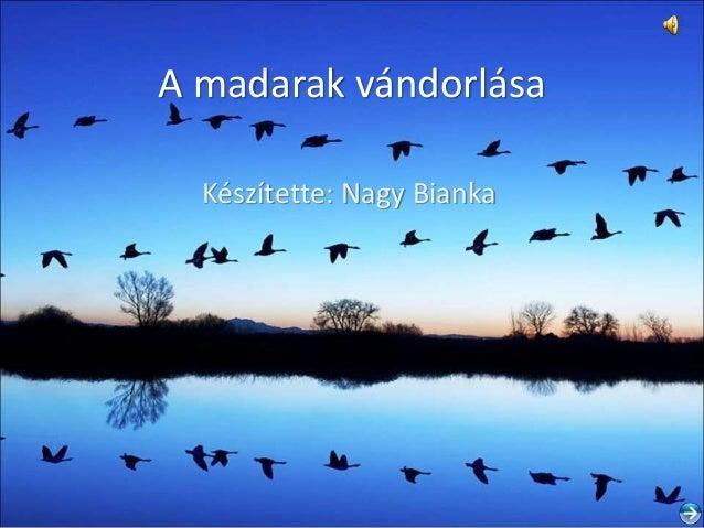 A madarak vándorlása Készítette: Nagy Bianka