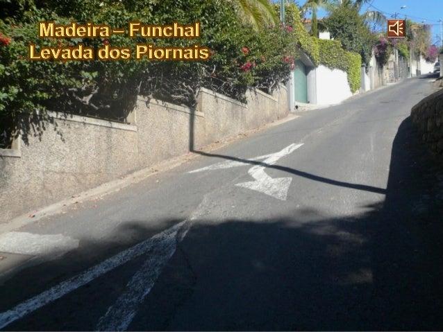 Madeira - Levada Dos Piornais - 2009