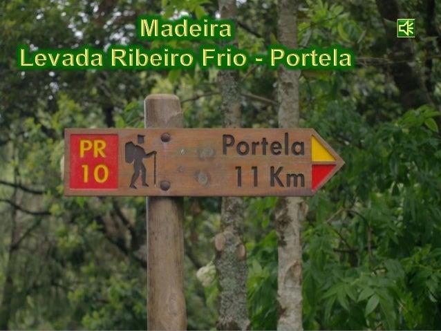 Madeira - Levada Ribeiro Frio - Portela - 2009