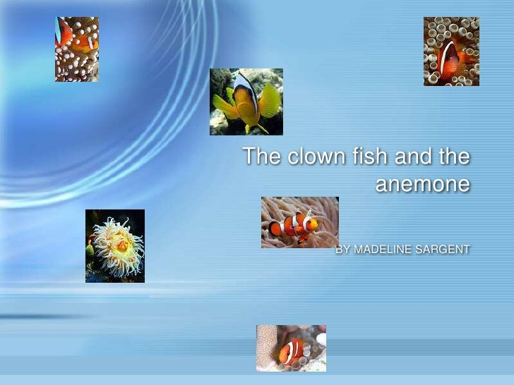 The clown fish and the anemone<br />BY MADELINE SARGENT<br />