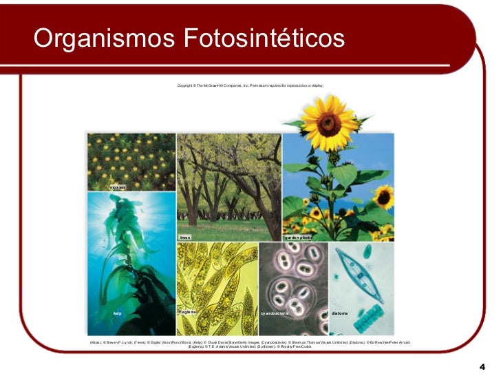 ORGANISMOS FOTOSINTETICOS EPUB