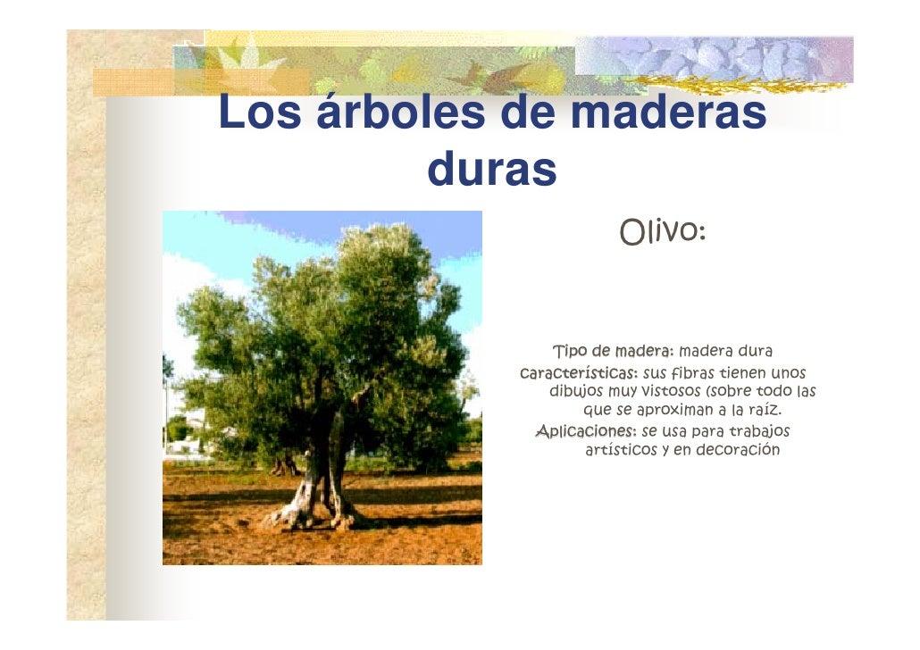 Madera for Las caracteristicas de los arboles