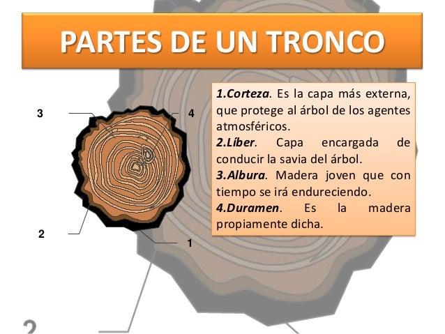 Todo sobre la madera for Las caracteristicas de los arboles