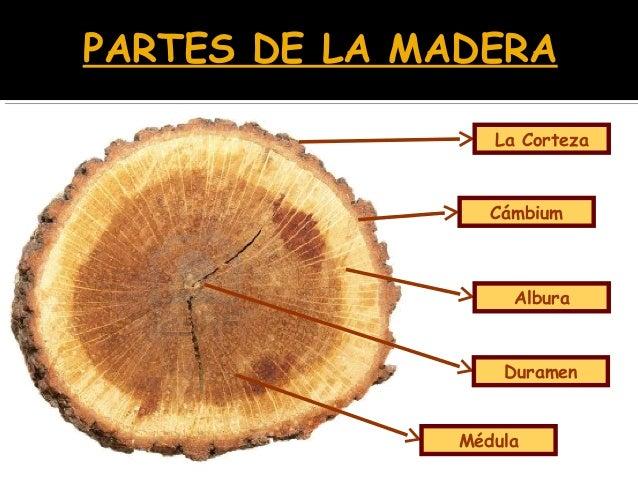 Madera for La beta de la madera