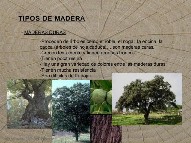 Madera for Diferencia entre arboles de hoja caduca y hoja perenne