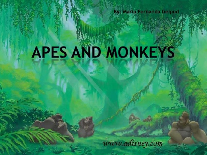 By: Maria Fernanda Gelpud<br />Apes and monkeys<br />
