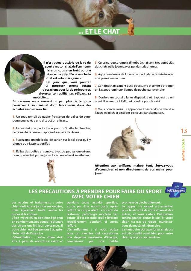 13 Les vaccins et traitements : votre chien doit être à jour de ses vaccins, mais également traité contre les puces et le...