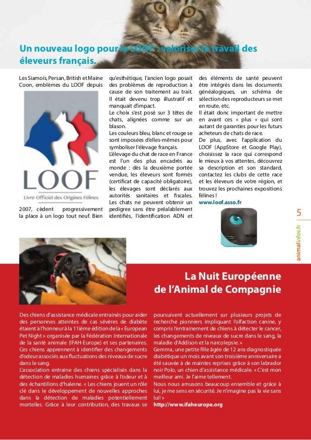Des chiens d'assistance médicale entrainés pour aider des personnes atteintes de cas sévères de diabète étaientàl'honneurà...