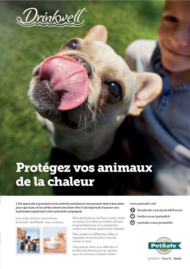 Protégez vos animaux de la chaleur L'été approche à grand pas et les activités extérieures vont pouvoir battre leur plein,...