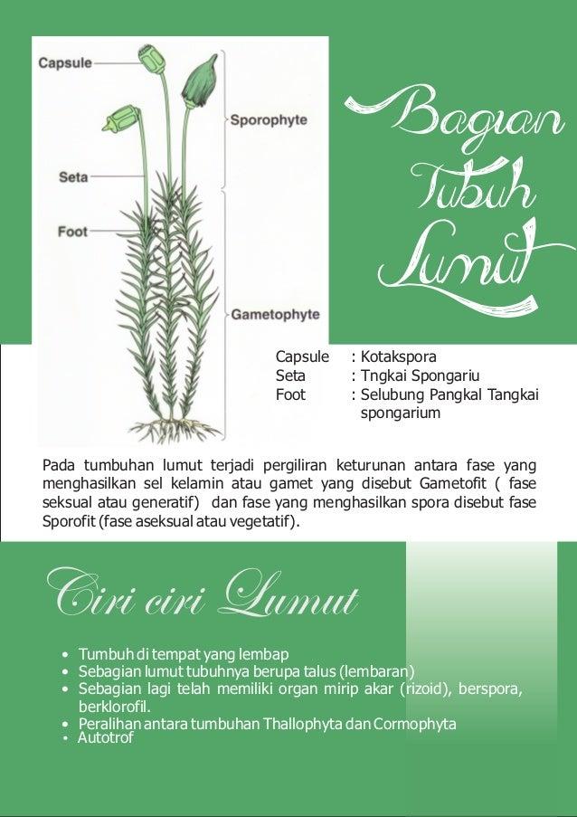 E Magazine Klasifikasi Tumbuhan