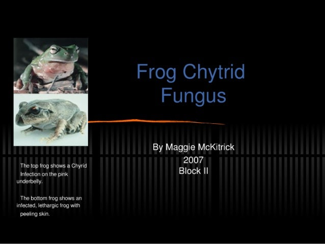 """j.  . .  I 'I  'J V 'oz,  ' g I —' ' 4 d i /  .~, i__.  _. _. as . _ I """" -' By Maggie McKitrick The top frog shows a Chyri..."""