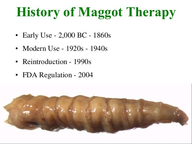 maggot therapy New science shows how maggots heal wounds new studies show how maggots clean wounds and help them heal  maggot therapy might sound medieval,.