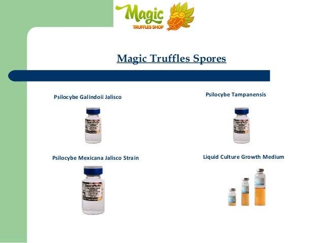 Magic Truffle Spores