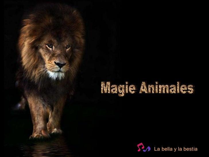 Magie Animales La bella y la bestia