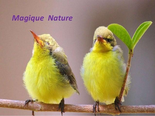 Magique Nature