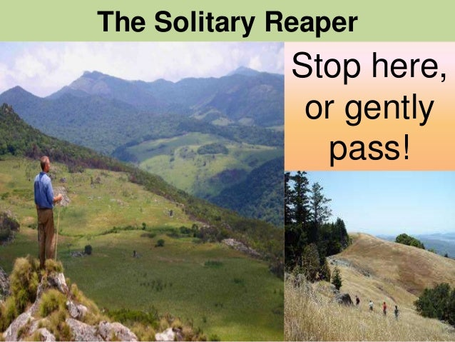 """thoughts on the solitary reaper by william wordsworth """"thoughts that do often lie too deep for tears""""  the solitary reaper  william wordsworth was a major english romantic poet who,."""